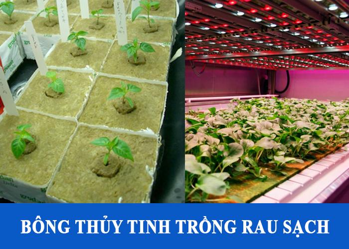 Sử dụng bông thủy tinh cách nhiệt trồng rau sạch